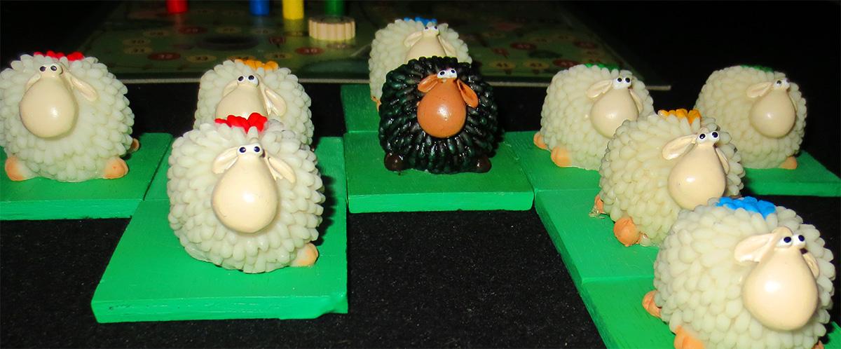 Plano de las ovejas